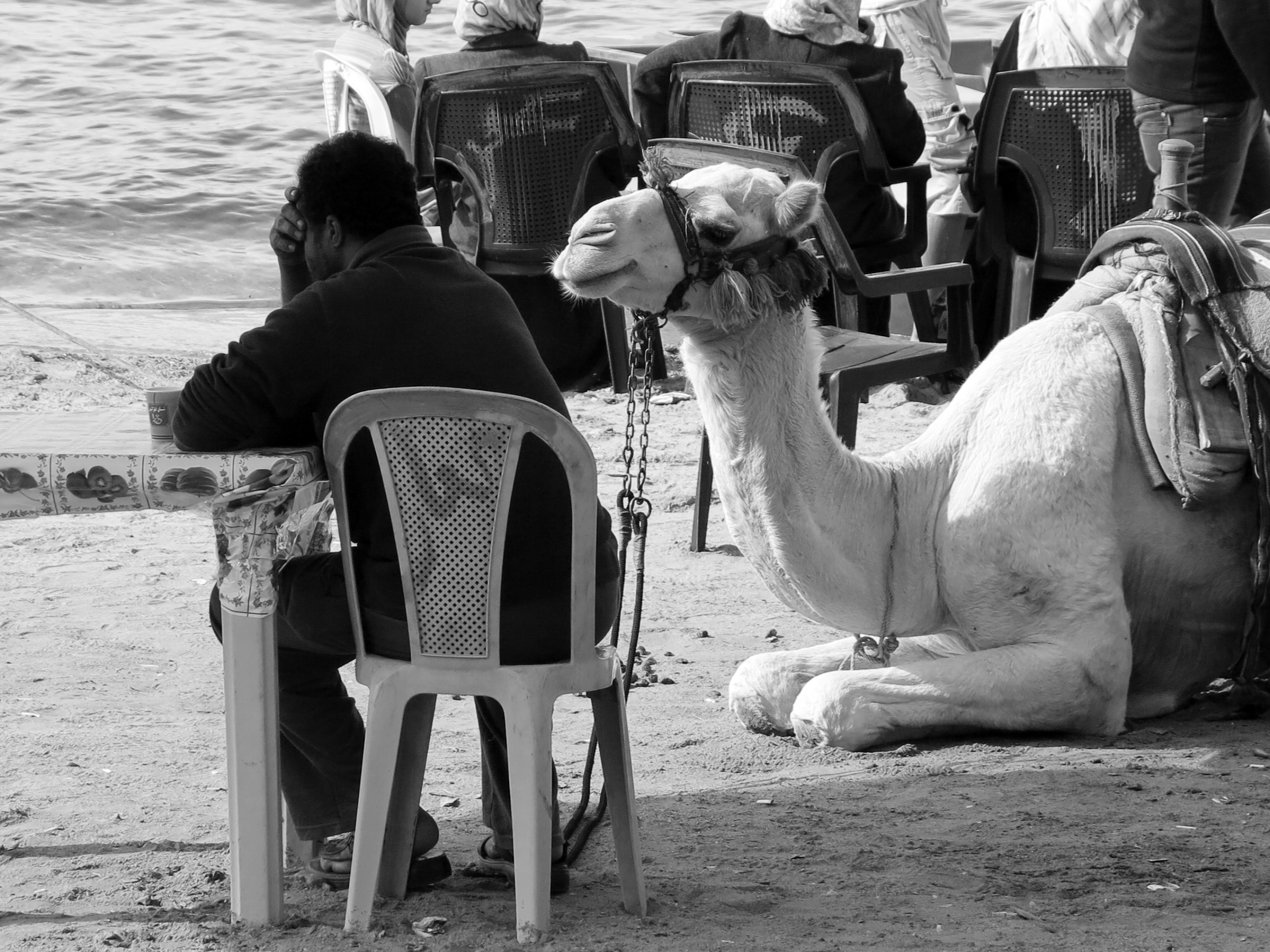 Waitung for a job. Stadtstrand Aqaba.